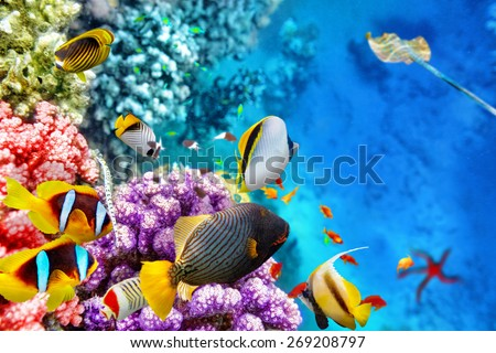 Wonderful and beautiful underwater world with corals and tropical fish. #269208797