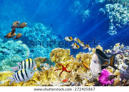 Wonderful and beautiful underwater world with corals and tropical fish. #272405867