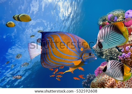 Wonderful and beautiful underwater world with corals and tropical fish, Red Sea #532592608