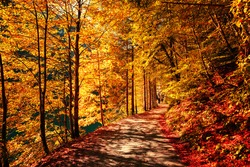 Wonderful autumn landscape. Beautiful romantic alley near popular alpine lake Grundlsee with colorful trees. Scenic image of forest landscape at sunny day. stunning nature background