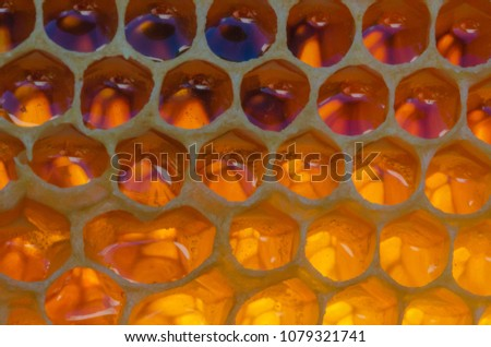 Wonderful background structure of bee honeycombs in a hive. Honeycombs filled with honey.