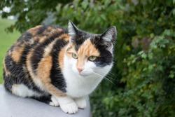 Wonderful Calico cat sitting outdoor on a wall