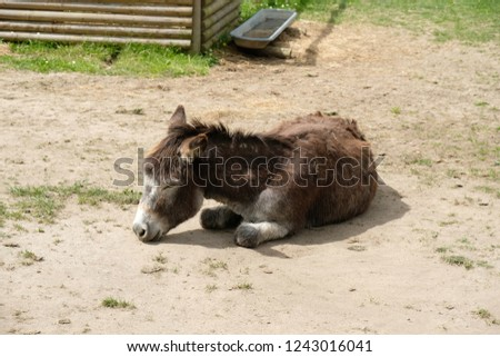 Wonderful donkey dozed off on a sunny day