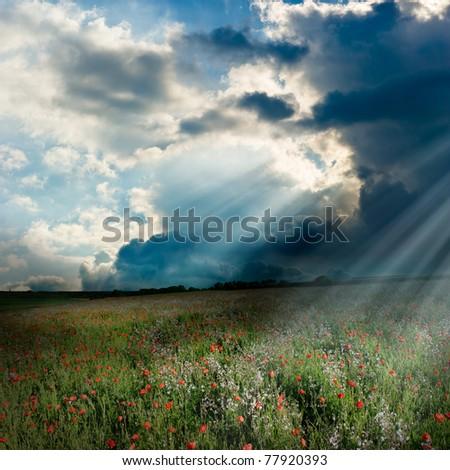 Wonderful god rays over the poppy field