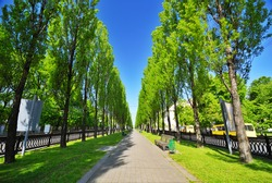 wonderful green alley in a city