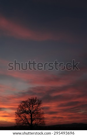 Wonderful landscape of big bare tree on horizon line in sunset with colorful blue orange sky on natural background, vertical picture