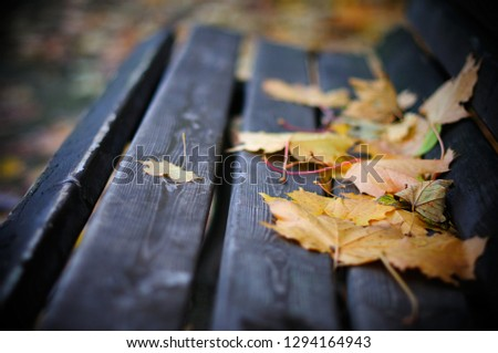 Wonderful poetic image of nostalgia, melancholy and inspiration with bench and fallen maple leaves as unspoken words