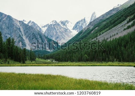 Wonderful snowy mountains behind small mountain lake with shiny water among rich vegetation. Creek flows from glacier. White clear snow on ridge. Amazing atmospheric landscape of highlands nature.