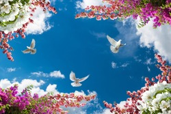 wonderful spring branches and flying pigeons in a clear sky