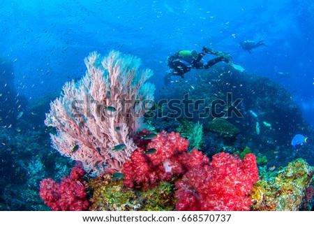 Stock Photo Wonderful underwater world with beautifully and vibrant colors of seafan corals and Scuba Diver.