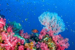 Wonderful underwater world with seafan and vibrant colors of corals and fish, Scubadiving Underwater seascape concept.