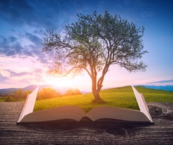 Wonderful valley in a evening light with big tree on a green hill on the pages of an open magical book. Majestic landscape. Travel and education concept.