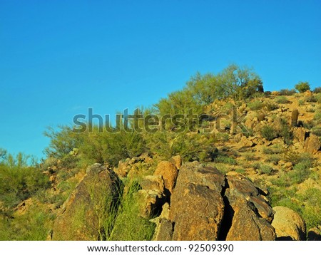 Wonderful views of the rich desert flora and the Superstition Mountains abound at Usery Mountain Park, in Mesa, Arizona.