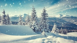 Wonderful Winter Landscape. Awesome Alpine Highlands in sunny day. Majestic frosen trees under Sunlight sparkling. Amazing Nature Scenery at Fairytale wintry woodland. Beautiful Natural background
