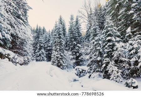 Wonderful wintry landscape.  #778698526