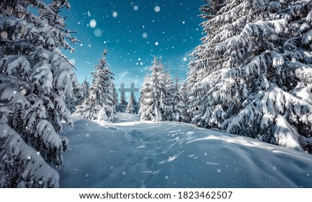 Wonderful wintry landscape. Winter mountain forest. frosty trees under warm sunlight. picturesque nature scenery. creative artistic image. Nature background. winter holiday day. Christlmas concept