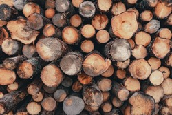 Wood and Sawmill. Large round logs harvested for construction. Production and sale of building materials. Stacked boards and logs. The texture of wood.