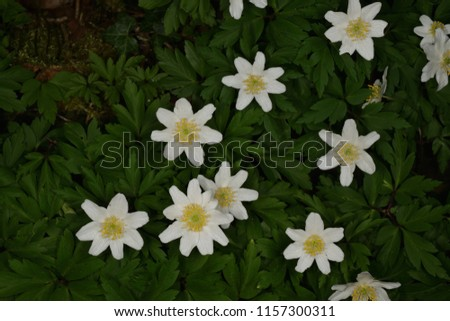 Free photos white flowers with yellow center avopix small white flowers with yellow centre 1157300311 mightylinksfo