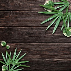 wood background leaves nature, wood texture, wood frame, leaf background, tree frame, tree background, nature texture, nature frame, healthy image, product background, logo , green
