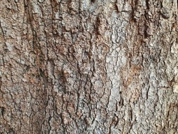 Wood Background.Seamless bark tree texture. Background texture of tree bark. Skin the bark of a tree that traces cracking.