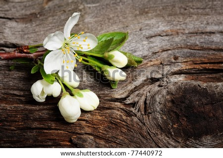 Wood background with spring cherry blossom