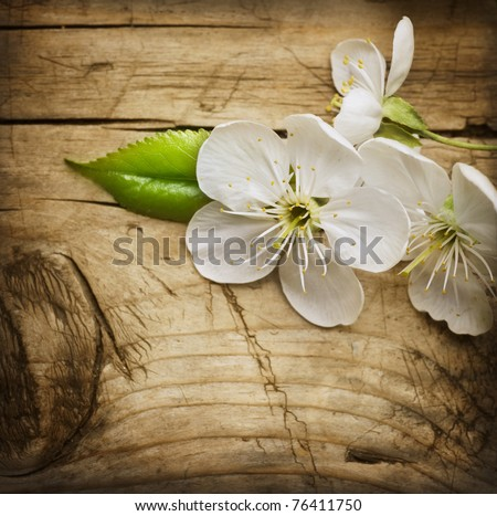 Wood background with spring flowers. Cherry blossom