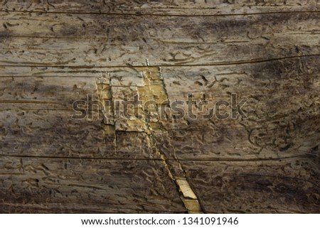 wood bark-free wood and patterns scratches partially scratched grunge background for design industry concept #1341091946