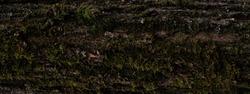 Wood bark texture. Dark wooden background. Tree close up. Nature backdrop.