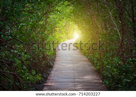 Wood bridge and natural tree tunnel