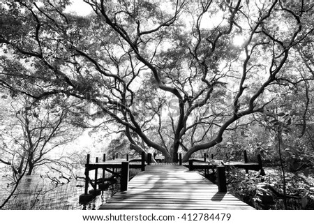 wood bridge and the mangrove forest in Rayong, Thailand. Black and White version
