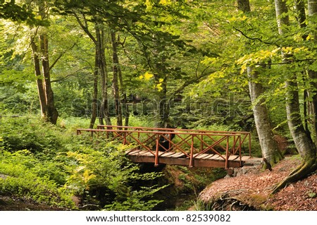 Wood Bridge in Forest,Zonguldak,Turkey