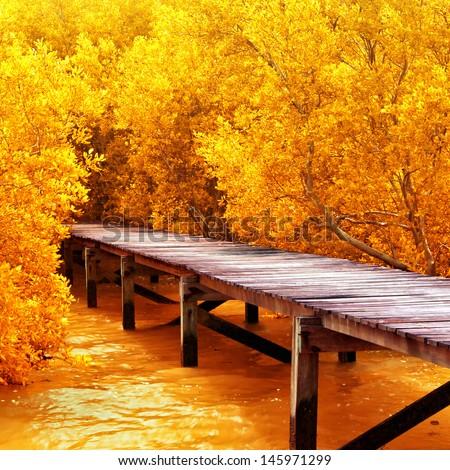 stock photo wood bridge in mangrove forest explore nature 145971299 - Каталог — Фотообои «Природа, пейзаж»