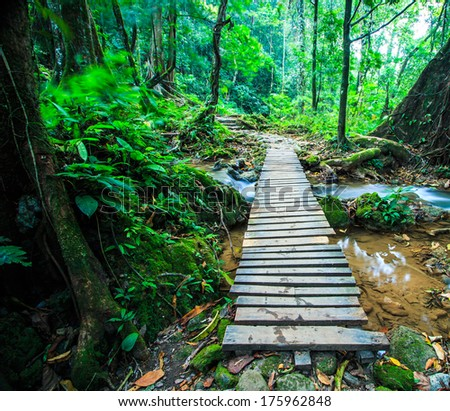wood bridge over the waterfall in Forest #175962848