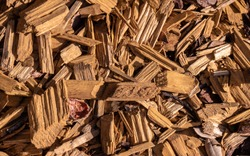 Wood chips abstract textured background. Timber sawdust chips shredded natural wooden material. Wood chips are used for gardening or biomass fuel.