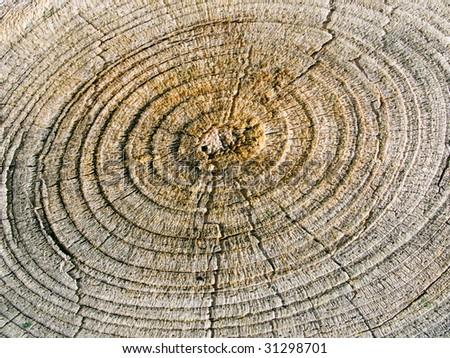 Wood circle closeup background.