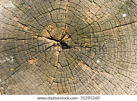 Wood circle closeup background (saw cut).