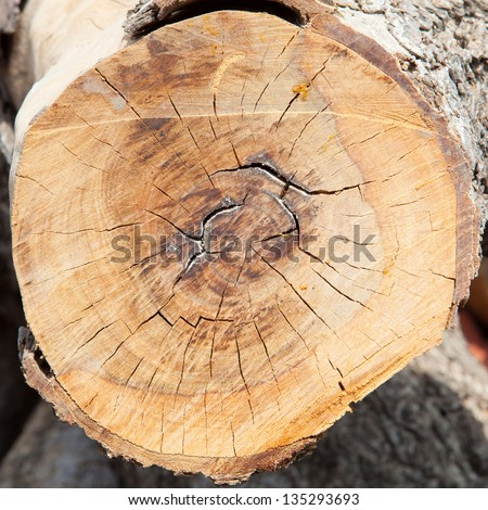 wood circle, cross section of tree stump