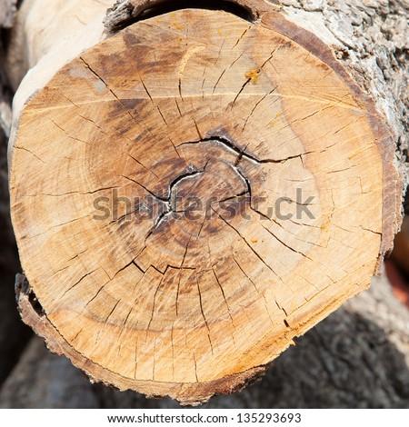 wood circle, cross section of tree stump