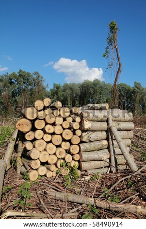 Wood exploitation, heap of logs in forest - stock photo
