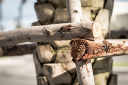Wood fence corner. Block of Rows, thin tree trunk with scratches serifs. Hard wood crack line outer layer of deciduous bark tissue surface stem. Texture light abstract background. More tone in stock