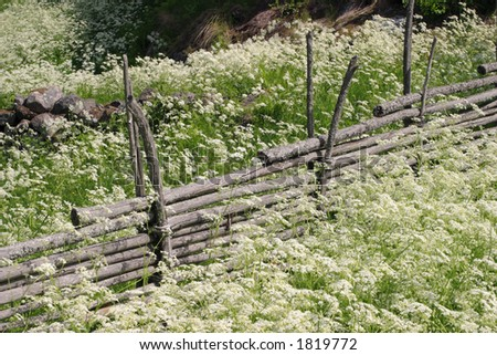 Wood fence in the pasture
