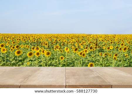 Wood floor scene of beautiful blue sky over sunflower field. Holiday vacation travel relax background with copy space for decorate design. #588127730