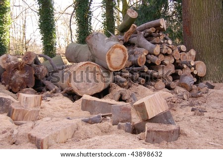 Wood for fire places
