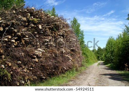 Wood Fuel for Biomass