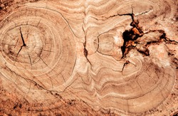 Wood grain texture of old tree stump with cracks in brown tone for background