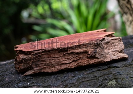 Wood has tiger stripe or curly stripe grain, Afzelia wood exotic beautiful pattern for crafts or abstract art Background #1493723021