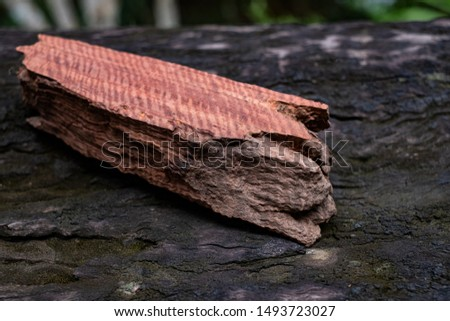 Wood has tiger stripe or curly stripe grain, Afzelia wood exotic beautiful pattern for crafts or abstract art Background #1493723027