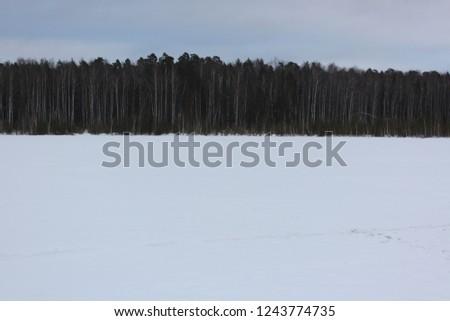wood horizon  windder snowy forest winder nature dark weather snowed surface lake in russian forest  - Shutterstock ID 1243774735