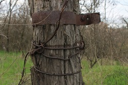 Wood in a metal plate. Wire on a tree.