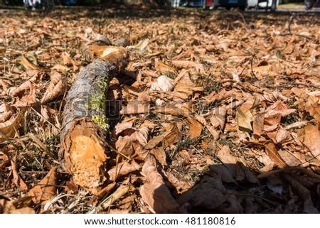Wood Log Orange Autumn Leaves Ground Nature Outdoors Park #481180816